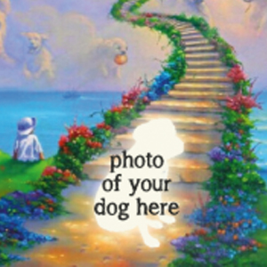 CUSTOM DOG HEAVEN RAINBOW BRIDGE Friends Diamond Painting Kit Paint with Diamonds Kit