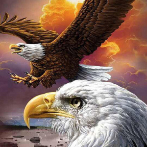 EAGLE IN FLIGHT Diamond Painting Kit Paint with Diamonds Kit