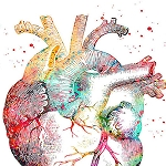 ANATOMICAL HEART Diamond Painting Kit Paint With Diamonds Kit