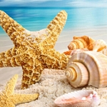 BEACH SHELLS Diamond Painting Kit Paint With Diamonds Kit