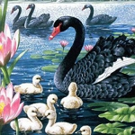 BLACK SWAN Diamond Painting Kit Paint with Diamonds Kit