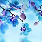 BLUE ORCHIDS Diamond Painting Kit Paint with Diamonds Kit