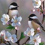 CHICKADEE CHERRY BLOSSOM Diamond Painting Kit Paint with Diamonds Kit