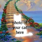 CUSTOM CAT HEAVEN RAINBOW BRIDGE Diamond Painting Kit Paint with Diamonds Kit