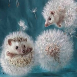 DANDELION HEDGEHOG Diamond Painting Kit Paint with Diamonds Kit
