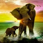 ELEPHANT OCEAN Diamond Painting Kit Paint with Diamonds Kit