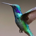 GREEN HUMMINGBIRD Diamond Painting Kit Paint with Diamonds Kit