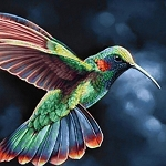 HUMMINGBIRD FLIGHT Diamond Painting Kit Paint with Diamonds Kit