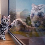 KITTEN & TIGER REFLECTION Diamond Painting Kit Paint with Diamonds Kit