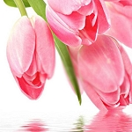 PINK TULIPS Diamond Painting Kit Paint with Diamonds Kit