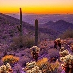 SAGUARO SUNSET Diamond Painting Kit Paint With Diamonds Kit