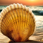 BEACH SHELL & SUN Diamond Painting Kit Paint With Diamonds Kit