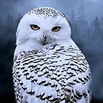 SNOWY OWL Diamond Painting Kit Paint with Diamonds Kit