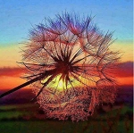 DANDELION SUNSET Diamond Painting Kit Paint with Diamonds Kit