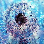 FROZEN DANDELION Diamond Painting Kit Paint with Diamonds Kit